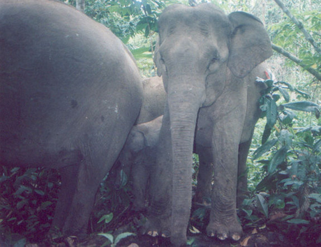 Wildlife Picture Index: Usando el Big Data para la Protección de la Naturaleza