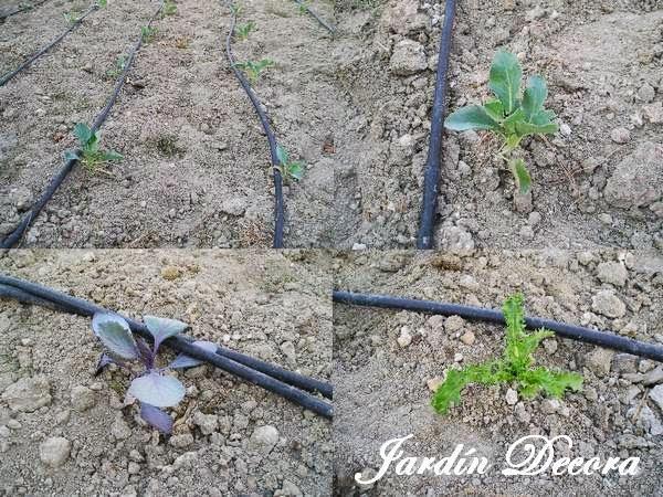 Instalar un riego por goteo en el jard n paperblog - Como empezar un jardin ...