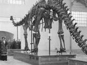 """""""Diplodocus carnegii"""": años Museo Nacional Ciencias Naturales (Madrid)"""