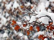 otoño divertido... Autumnfun revisión (II)
