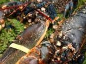 Marisco gallego fresco domicilio, precios congelados