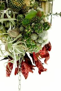 Colgante de cactus y plantas crasas paperblog - Plantas crasas colgantes ...