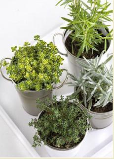 Deco hack plantar hierbas arom ticas paperblog - Plantar hierbas aromaticas ...