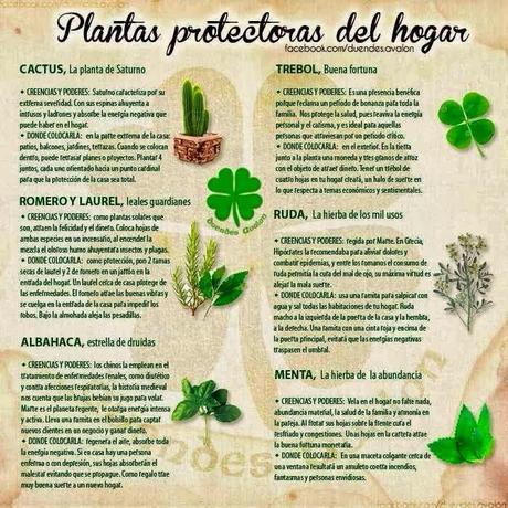 Plantas que protegen tu hogar