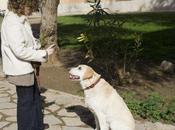 Trastornos conductuales caninos