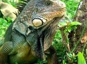 INBIOparque parque resume toda biodiversidad Costa Rica