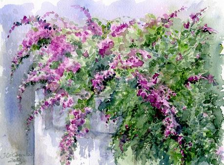 Buganvillas acuarela watercolor paperblog - Fotos de buganvillas ...