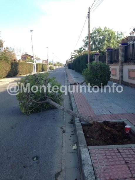Destrozos arboles Montequinto
