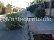 Identifican cuatro menores destrozar árboles Montequinto
