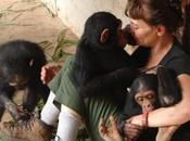 Conferencias: Carmen Vidal primates Congo