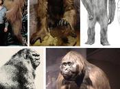 Gigantopithecus,el mono grande toda historia