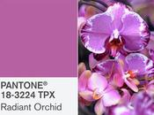 Color Pantone 2014: Orquídea Radiante