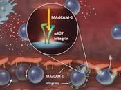 tratamiento Vedolizumab para Colitis ulcerosa ,recibe recomendación enfermedad Crohn