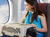 Viajar mascota avión
