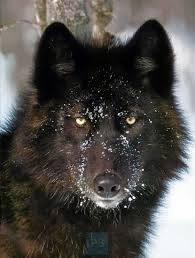 Reseña · Los tres nombres del Lobo