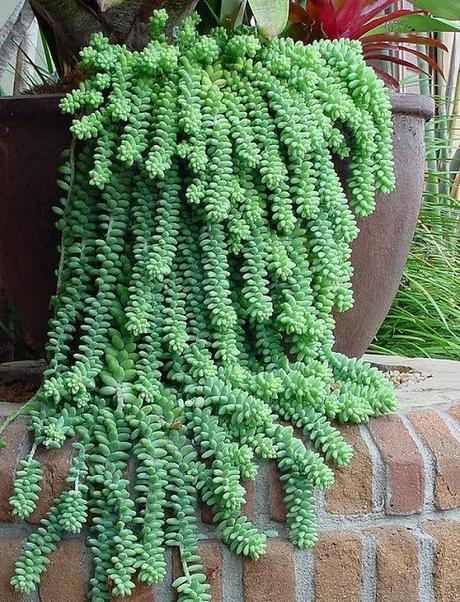 Plantas de interior y otras crasas o suculentas paperblog for Decoracion con plantas crasas