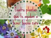 Cuatro plantas harán tener buena cara