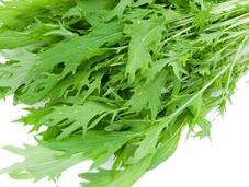 Mizuna (水菜): lechuga japonesa'