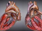 variante cromosoma predispone hombres enfermedades cardiovasculares
