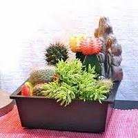 Decorar con cactus paperblog - Composiciones de cactus ...