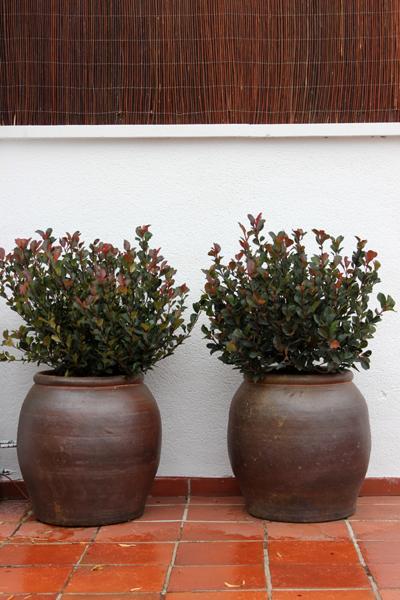 Dise o de jard n huerto urbano para la terraza de la for Disenos para azoteas