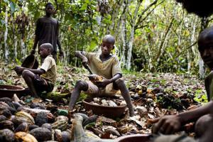 niños de 8 años con vainas de cacao. CNN