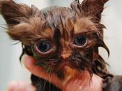 divertidas fotos gatos mojados después baño