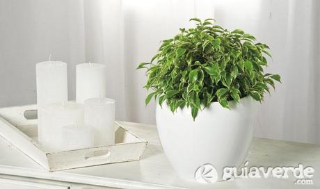 Las 10 Plantas De Interior Mas Faciles De Cuidar Paperblog