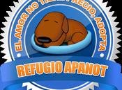 firma Apanot