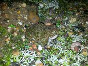 Salir censar anfibios encontrar animal vivo antiguo Planeta Exit number amphibians find oldest living Planet