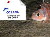 Salvar fondo mares.