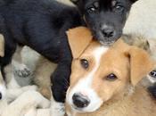 ¿Por esterilizar mascotas?