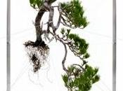 Escultura verde bonsai