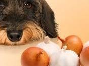 "mandamientos nutrición canina dirás ""este alimento prohibido para perro"""