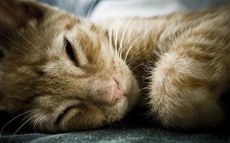 Causas y tratamiento natural para el insomnio