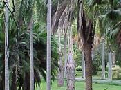 Jardín Botánico Centro Médico Caracas unidos favor cultivo palmas