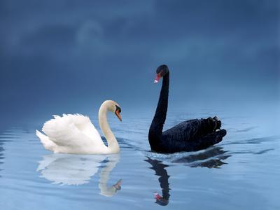 La felicidad, ese cisne negro