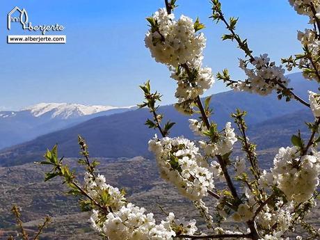 Cerezo en flor 2014 valle del jerte paperblog for Oficina de turismo valle del jerte