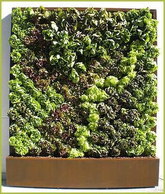 C mo hacer un jard n vertical primera parte paperblog for Como se construye un jardin vertical