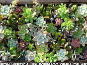 Cómo hacer jardín vertical Primera parte