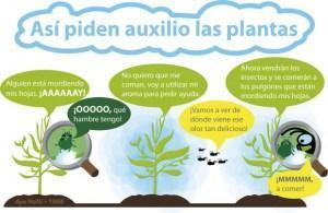 auxilio plantas