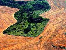 Marzo: Internacional Bosques