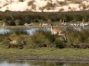 Parques Nacionales Doñana Sierra Nevada pierden visitantes último