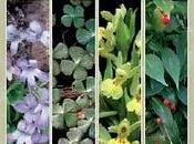 Catálogo Valenciano Flora Amenazada Libro