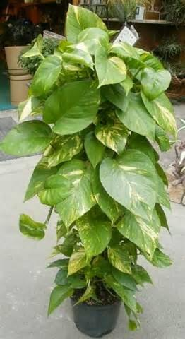 Plantas t xicas en el hogar paperblog for Plantas en el hogar