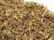 Propiedades stevia. Edulcorante natural.