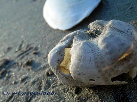 Macro del día - Un día redondo en la playa