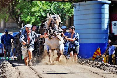 """El Tiro y Arrastre,en valenciano """"Tir i arrossegament"""" es un deporte autóctono de la Comunidad Valenciana."""