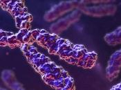 Biología sintética. Cromosoma carta…
