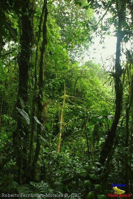 Refugio de Vida Silvestre La Marta -Senderos- (Pejibaye de Jiménez de Cartago)